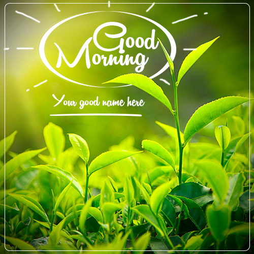 Write Name On Good Morning Leaf Pics