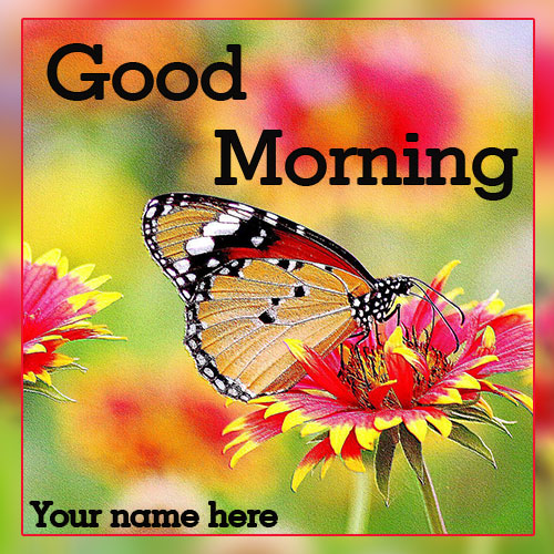 Good Morning With Butterfly Images and Quotes